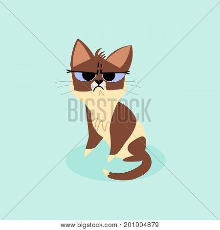 Snowshoe siamese grumpy kitten isolated on a blue background. Vector cartoon illustration
