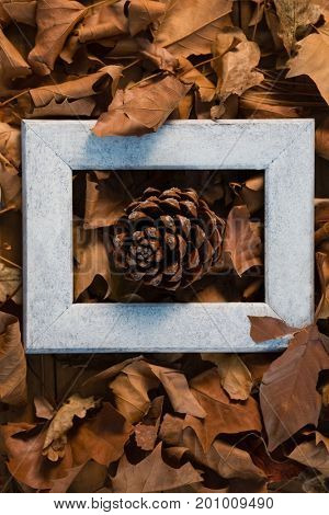 Overhead view of pine cone amidst frame on dried leaves