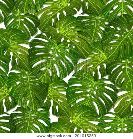 Seamless Tropical background - realistic vector leaves. Botanical vector wallpaperern of palms leaves