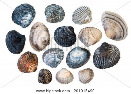 Set Of Sea Clam Mollusc Shells Of Scallop, Isolated On White Background, Close Up, Top View.