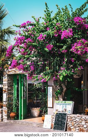 FALIRAKI, RHODES, GREECE - AUGUST 2017: Entrance to traditional Greek tavern decorated with beautiful bougainvillea flowers.