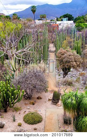 Ethnobotanical garden of the Santo Domingo Temple with a collection of plants native to Oaxaca Mexico