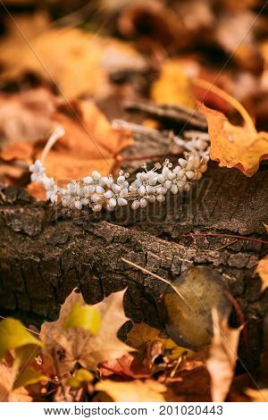 Diadem. Accessories For The Bride Against The Background Of The Tree Trunk And Autumn Foliage. Artwo