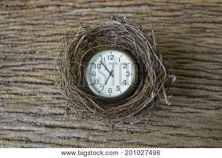 concept idea for business and real estate time to new born image of bird's nest with clock