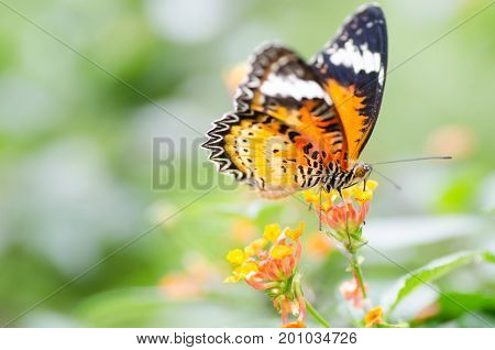 Beautiful butterfly is pollinating on flowers garden