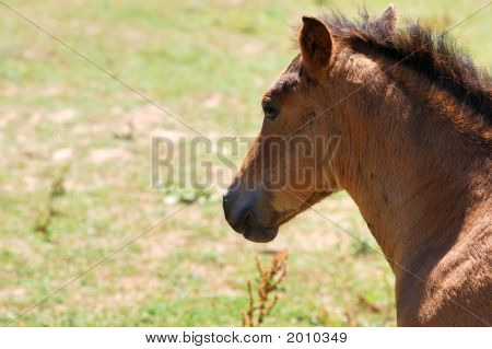 Careful Horse
