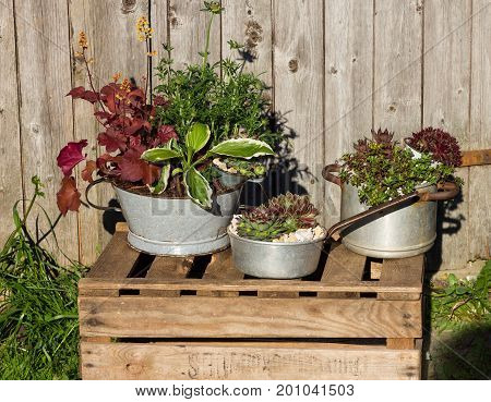 Several perennial plants plantet in vintage kitchen utensils like old cooking pots and tins.