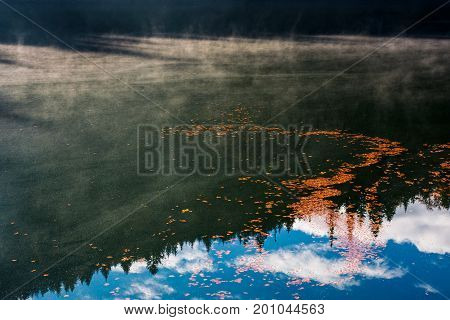 Foliage On The Misty Water Surface