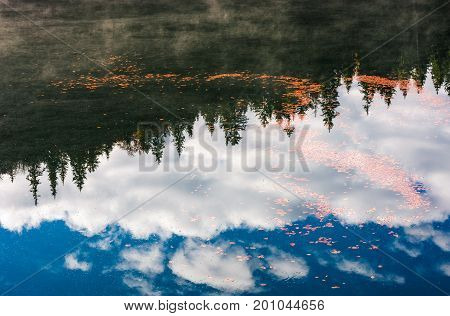 Foliage On The Water Reflecting Forest And Sky