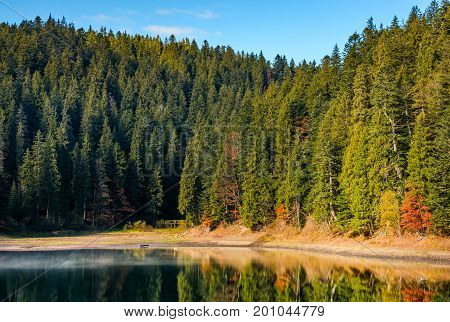 Coniferous Forest With Hazy Lake In Mountains