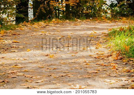 Close-up of forest trail. Road with many fallen leaves, autumn landscape and copy spase for text. Clear sunny autumn day. Fall background