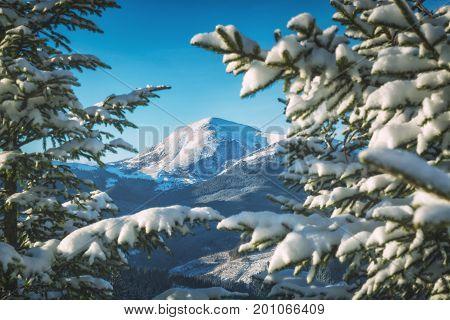 View Of Highest Carpathian Mountain Hoverla