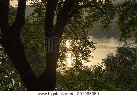 Trees and a lake with a reflecting sun after sunrise.