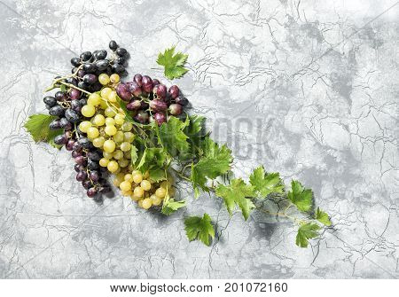 Grape vine with green leaves on concrete stone texture. Food background