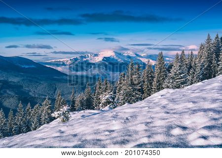 Winter Carpathian Hill Covered With Snow