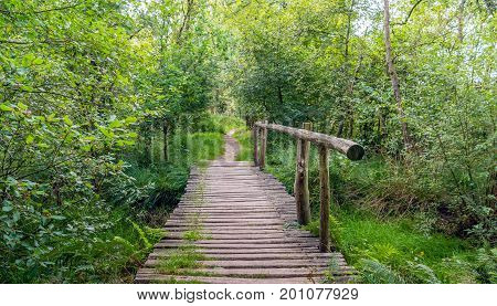 Simple wooden bridge over a small creek in a Dutch nature reserve on a nice day in the summer season.