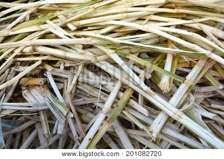 Sugarcane residues ** note  select focus with shallow depth
