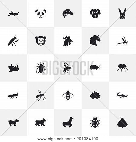 Collection Of Herculeanus, Grasshopper, Fly And Other Elements.  Set Of 25 Alive Icons Set.