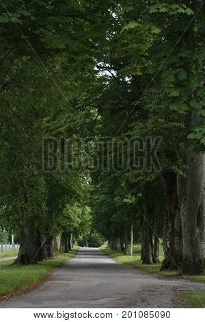 An old wooden alley from the old days of the German Barons in Pope palace