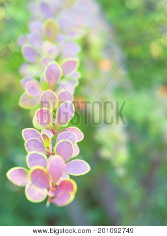 Blurry background with brunch with little pink leaves