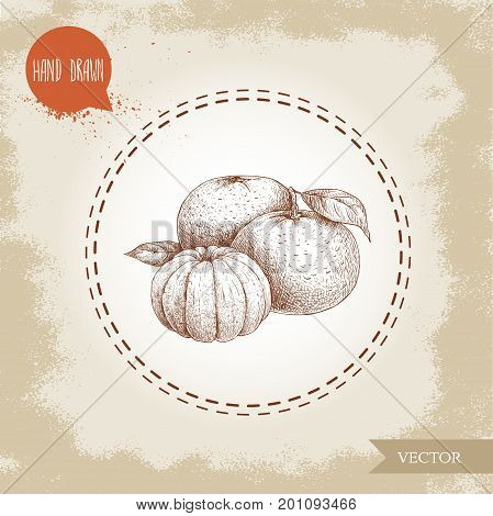 Hand made sketch mandarin composition with leafs and peeled mandarin. Vintage style illustration of tangerine with leaf. Eco food vector artwork.