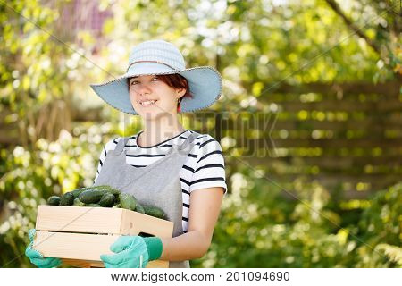Photo of smiling woman agronomist in hat with crop of cucumbers in box