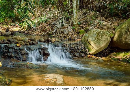 Bright jungle with stone and river. Natural landscape.