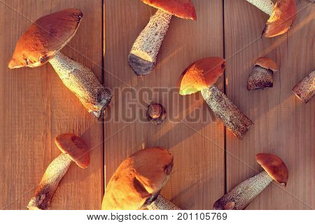 Fresh edible mushrooms spread out on the street table top view / Forest delicacies