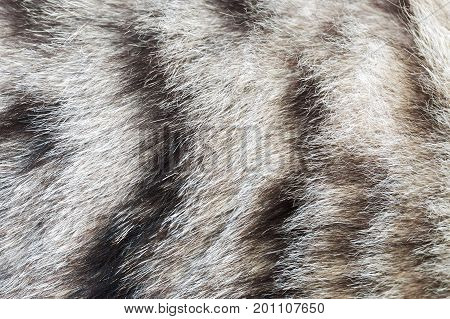 texture striped cat fur wool close up
