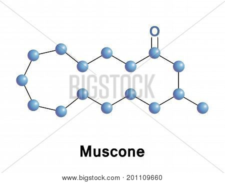 Muscone is an organic compound that is the primary contributor to the odor of musk.