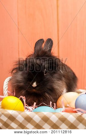 Easter rabbit. Easter Bunny and eggs. Easter bunny with eggs on wooden background. Funny little rabbit among Easter eggs. Post blog social media easter. Banner template layout mockup for happy easter