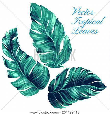 vector palm illustrations, isolated on white. Beautful palm leaves. Graphic design elements, isolated, Tropical design elements.