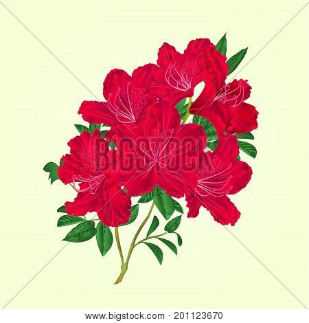 Twig red rhododendron flowers and leaves vintage botanical vector editable illustration hand draw