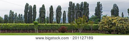 Lujan de Cuyo vineyard, Mendoza province, Argentina