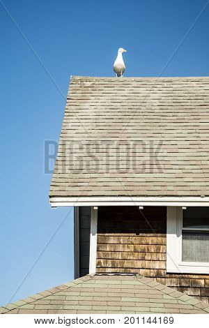 Roof from a New England home, Maine