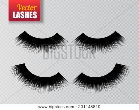 Lashes isolated on transparent background. False eyelashes set. Vector illustration