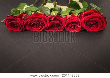 beautiful red roses on a black background