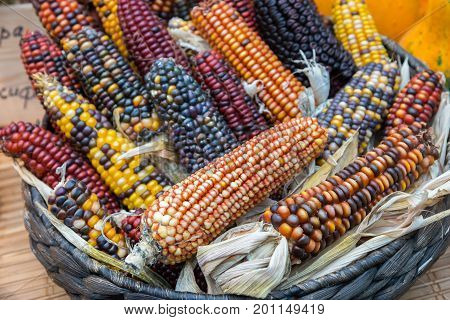 colorful Indian corn in a black basket