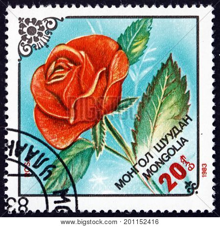MONGOLIA - CIRCA 1983: a stamp printed in Mongolia shows Flower of Rose Flowering Plant circa 1983