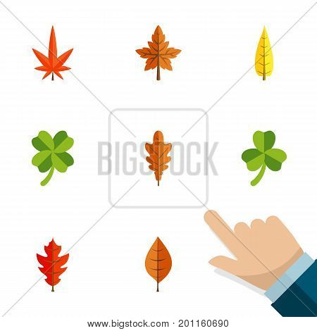 Flat Icon Maple Set Of Leaf, Maple, Alder And Other Vector Objects
