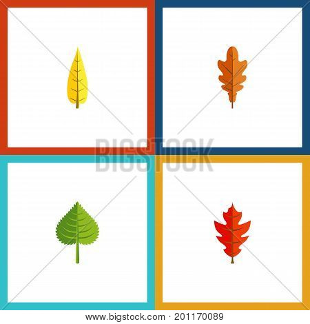 Flat Icon Leaf Set Of Maple, Hickory, Linden And Other Vector Objects