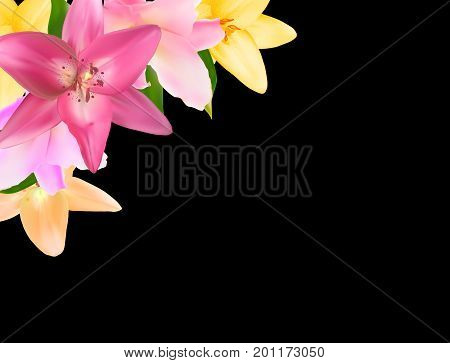 Vector Illustration with Lily Flowers Isolated on Black Background EPS10