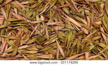 Fraxinus americana tree seeds plant texture pattern