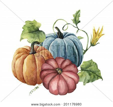 Watercolor autumn pumpkins. Hand painted bright pumpkins with leaves and flowers isolated on white background. Botanical illustration for design