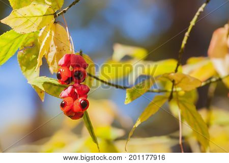 Beautiful vivid red berries close-up of scenic, colorful autumn colors, fall background. Fall has come, real beauty of autumn colors. Autumn background, fall light
