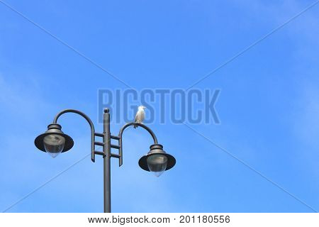 Seagull Resting Over A Lamppost In Summer
