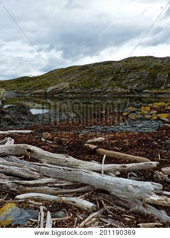 Dead trees lying at the sea Bleached white dead trees lying near the sea under a cold cloudy sky at H Island Ushuaia Argentina