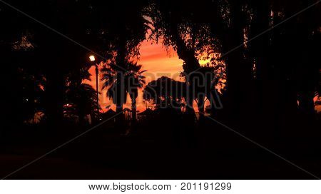Palm trees silhouette at sunset. Nice contrast between the red/orange sky and the dark silhouettes of the palms. Picture was taken in Vina del Mar Chile
