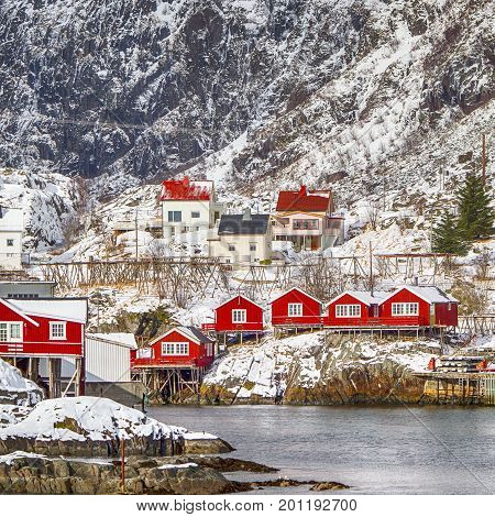 Red Wooden Traditional Huts Use Built With One End Of Pole in Water. Hamnoy and Reine Villages Houses of Lofoten Islands in Norway. Square Image Orientation
