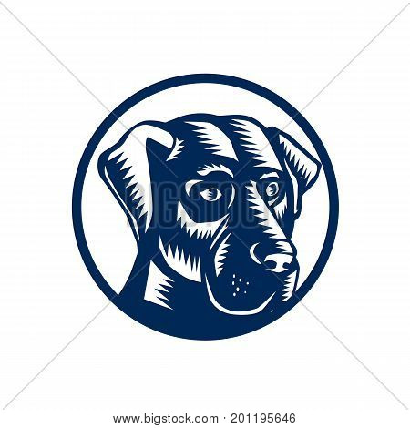 Illustration of a Black Labrador dog Head front view set inside Circle done in retro Woodcut style.